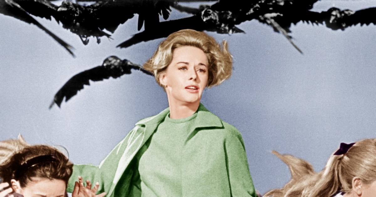 Frases De La Película Los Pájaros